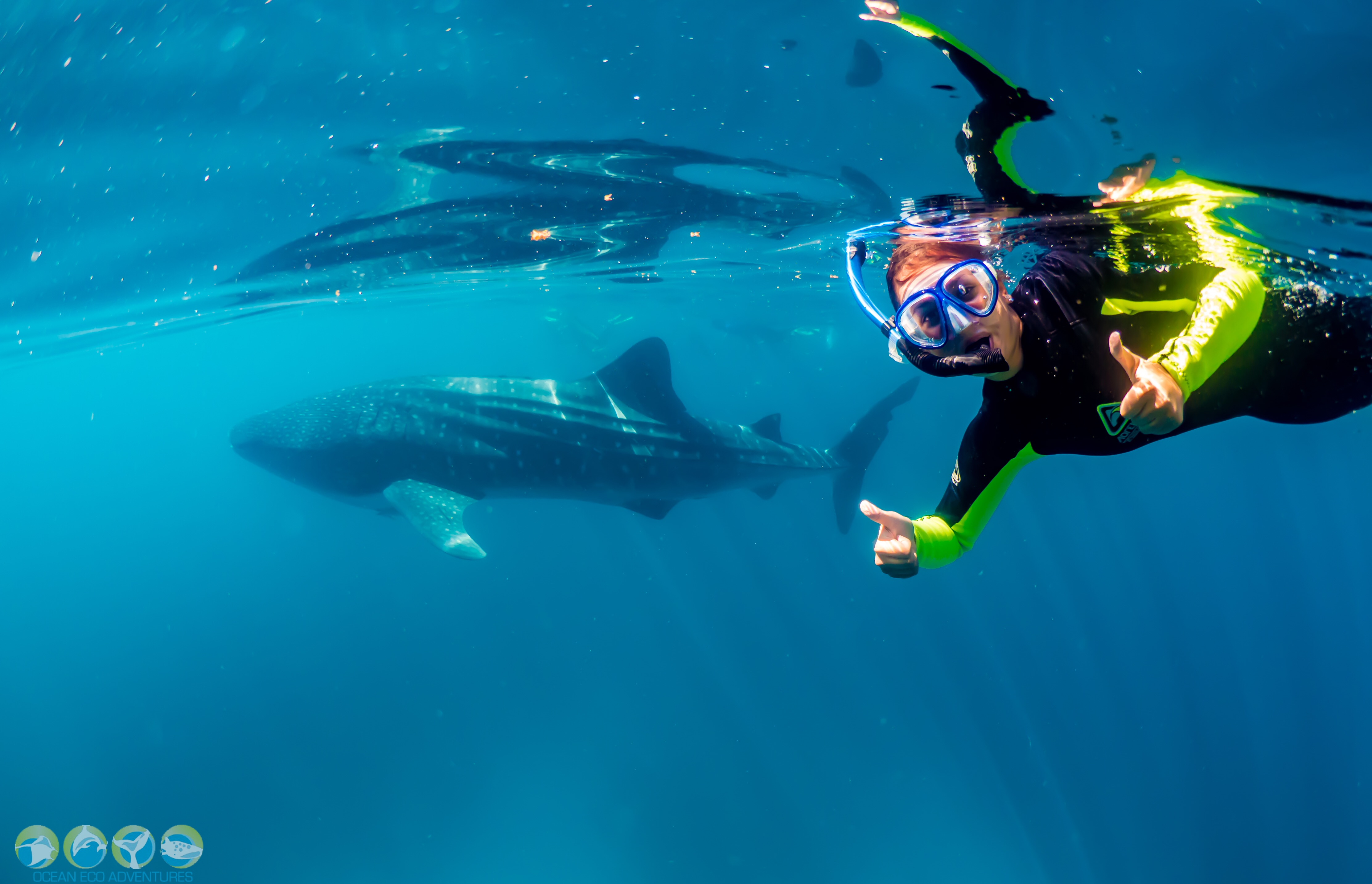 Review Of Ocean Eco Adventures Whale Shark Tour, Exmouth Western Australia