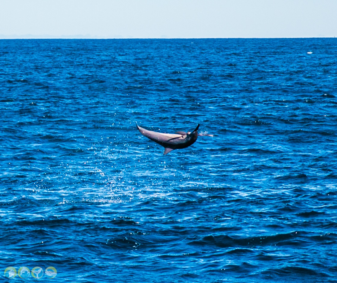 Review Of Ocean Eco Adventures Whale Shark Tour, Exmouth Western Australia.