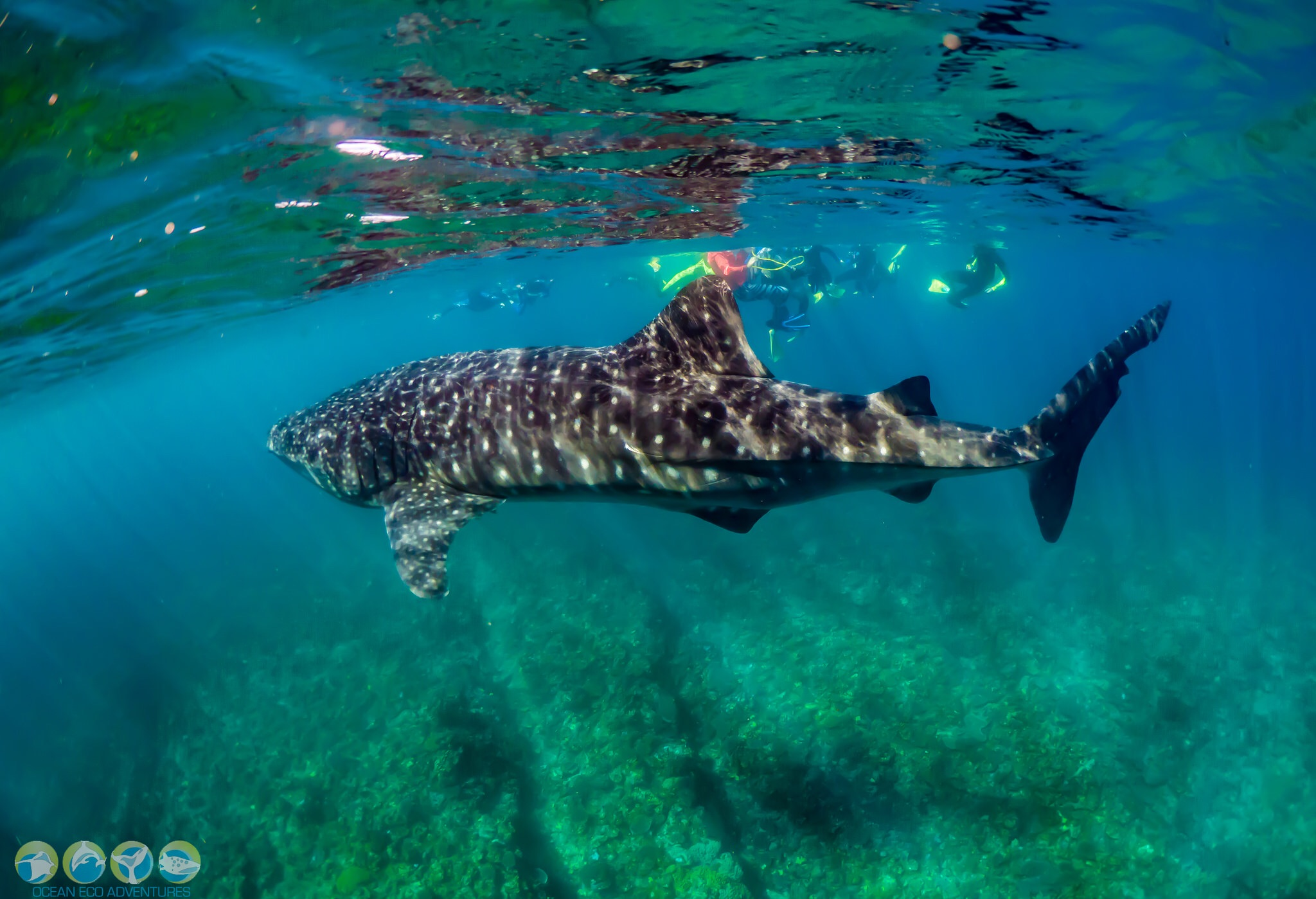 Review Of The Ocean Eco Adventures Whale Shark Tour, Exmouth Western Australia.