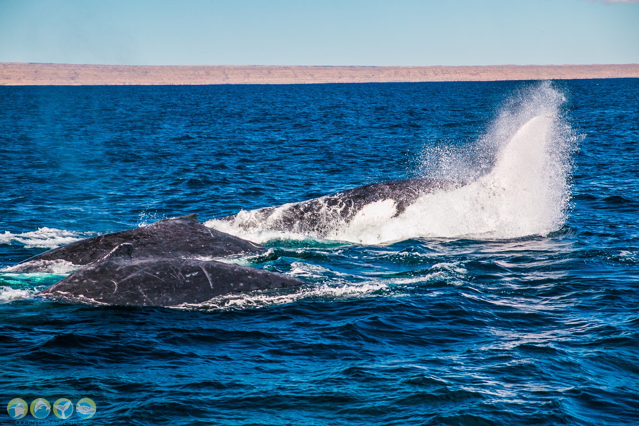 Review Of Ocean Eco Adventures Whale Shark Tour Exmouth Western Australia What S On Watsons